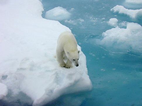 Polar-bear_c_Kathy_Crane_NOAA
