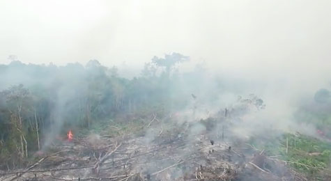 Indonesias_forest_fires_September_2015_c_Greenpeace