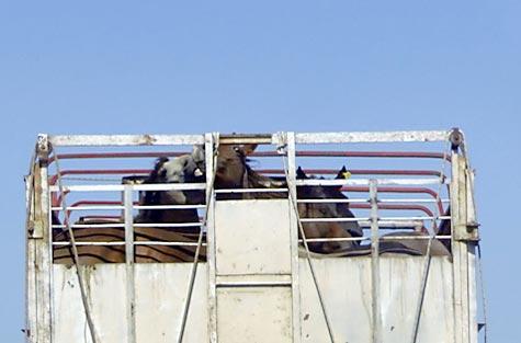 gaia-be_horsemeat
