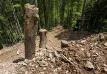 Urwaldzerstörung im Domogled Nationalpark (c) Matthias Schickhofer_EuroNatuUrwaldzerstörung im Domogled Nationalpark (c) Matthias Schickhofer_EuroNatu