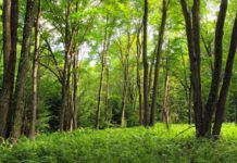 © Forest by Nicholas Tonelli/ Creative Commons