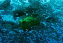 Marine Debris Plastic / Im Meer treibende Mülltonne vor Fiji (Foto: Thomas Ronge)