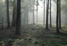 Wald Photo: pxhere.com